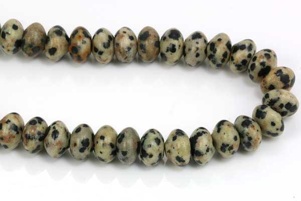 Dalmatiner jasper rhondeller